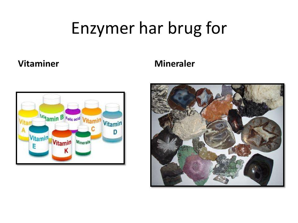 Enzymer har brug for Vitaminer Mineraler