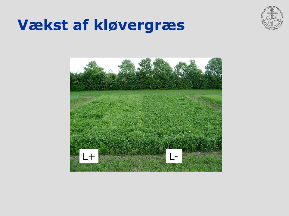 Vækst af kløvergræs L+ L-