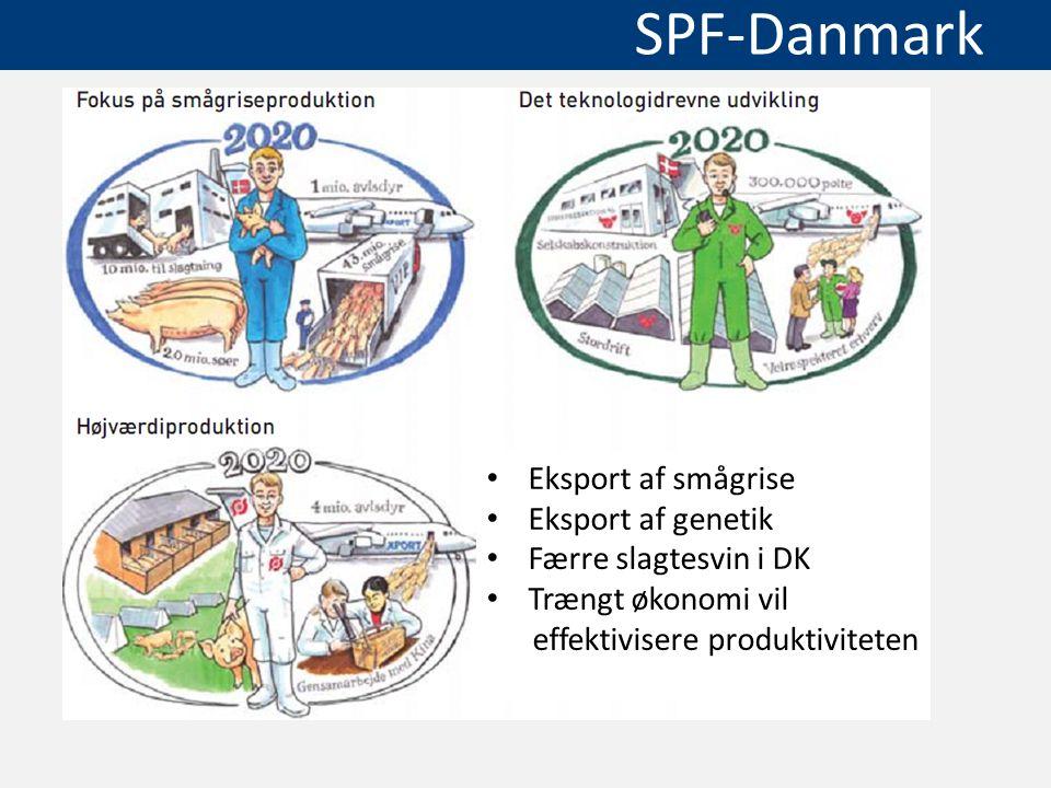 Eksport af smågrise Eksport af genetik. Færre slagtesvin i DK.