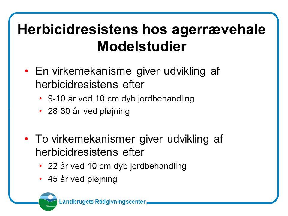 Herbicidresistens hos agerrævehale Modelstudier