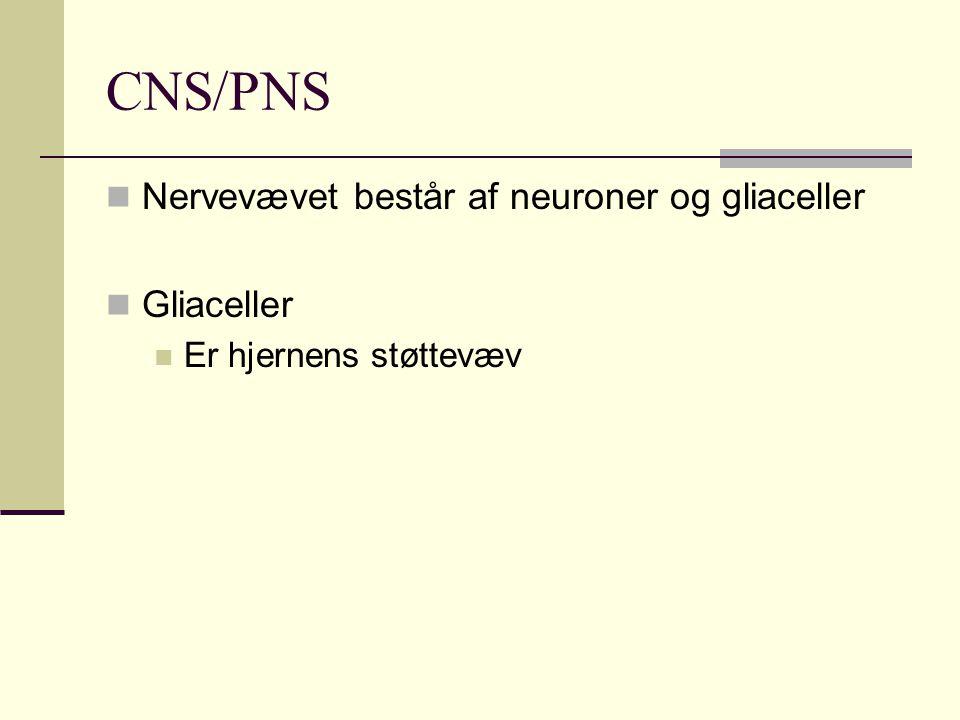 CNS/PNS Nervevævet består af neuroner og gliaceller Gliaceller