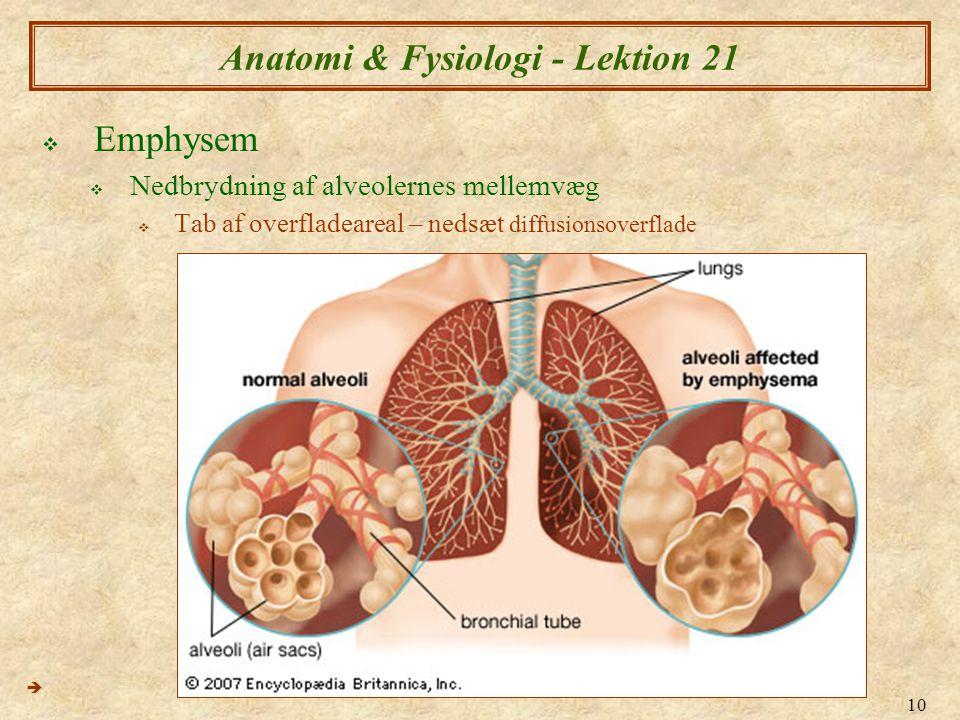 Anatomi & Fysiologi - Lektion 21