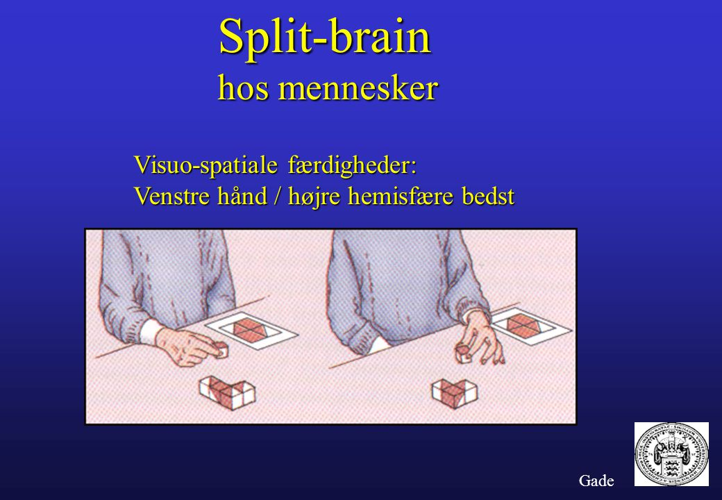 Split-brain hos mennesker Visuo-spatiale færdigheder: