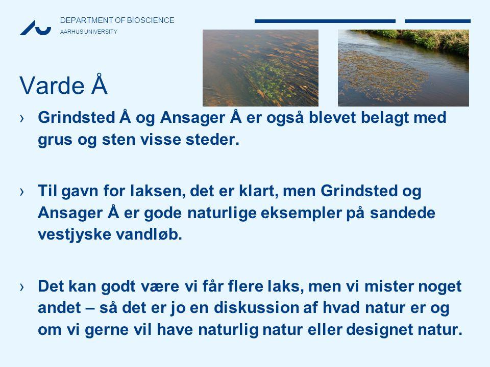 Varde Å Grindsted Å og Ansager Å er også blevet belagt med grus og sten visse steder.