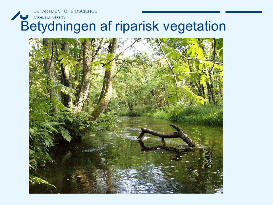 Betydningen af riparisk vegetation