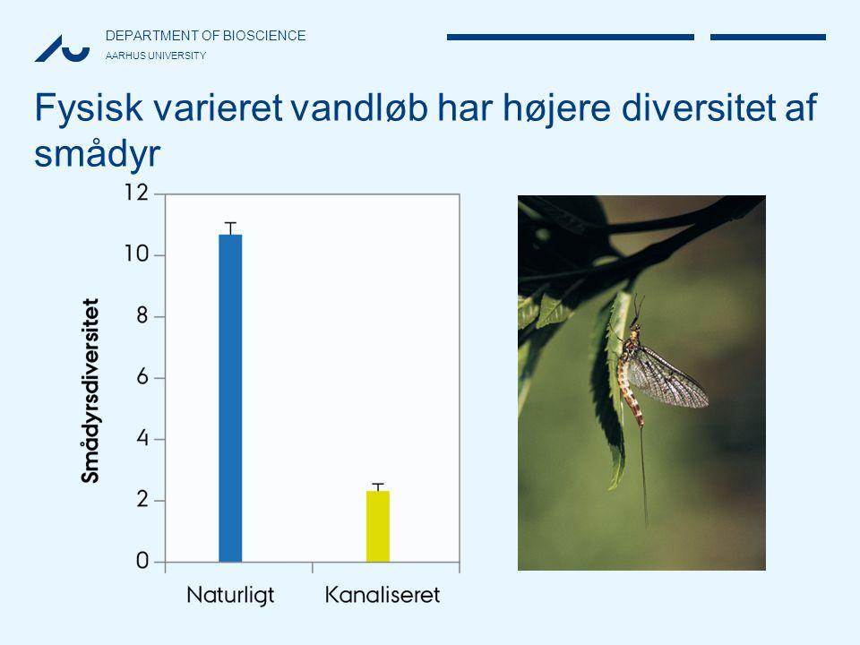 Fysisk varieret vandløb har højere diversitet af smådyr