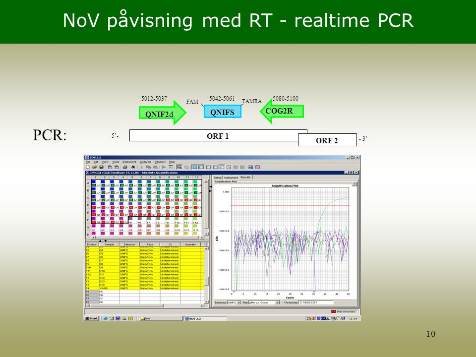 NoV påvisning med RT - realtime PCR