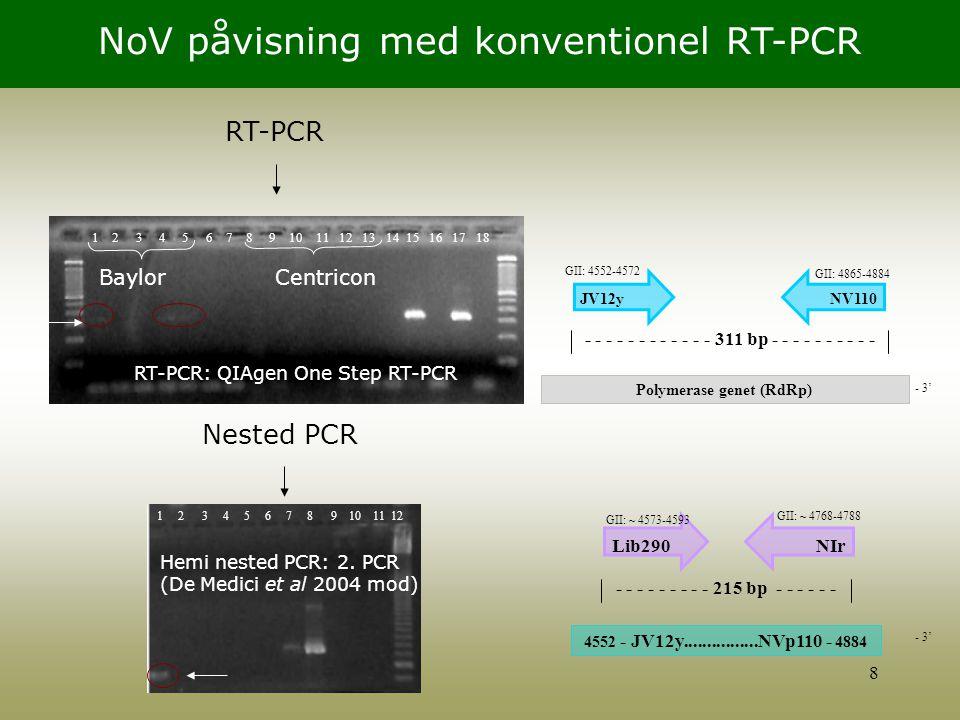 Polymerase genet (RdRp)