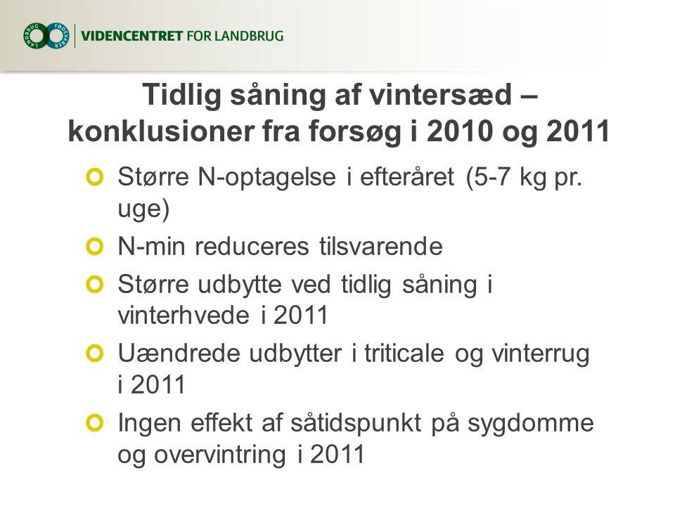 Tidlig såning af vintersæd – konklusioner fra forsøg i 2010 og 2011