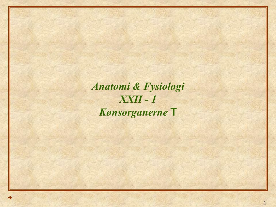 Anatomi & Fysiologi XXII - 1 Kønsorganerne T