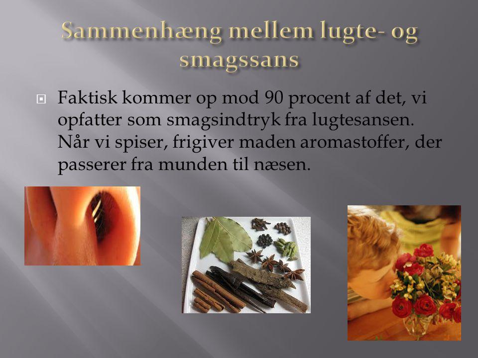 Sammenhæng mellem lugte- og smagssans