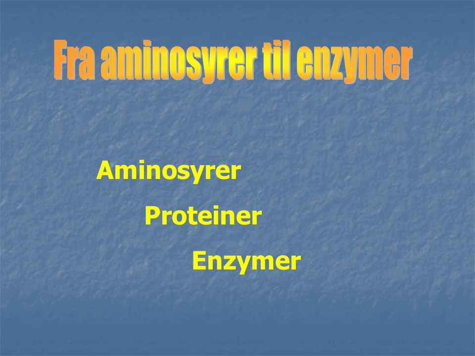 Fra aminosyrer til enzymer