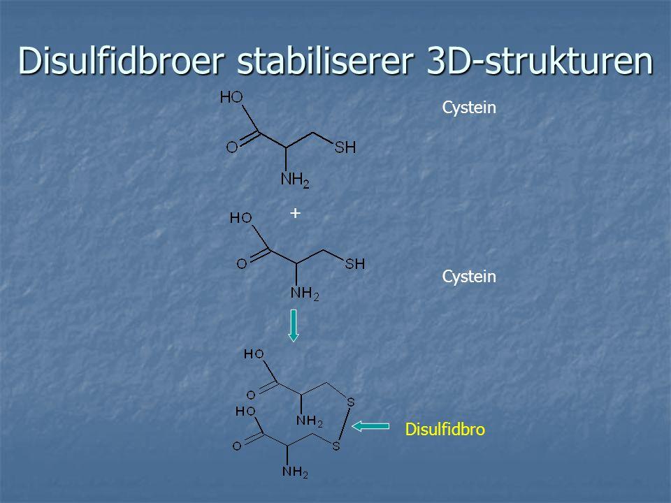 Disulfidbroer stabiliserer 3D-strukturen