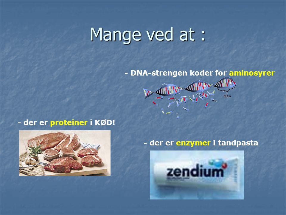 Mange ved at : - DNA-strengen koder for aminosyrer