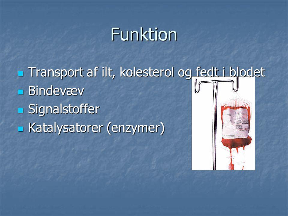 Funktion Transport af ilt, kolesterol og fedt i blodet Bindevæv