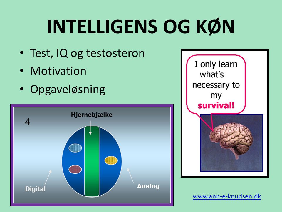 INTELLIGENS OG KØN Test, IQ og testosteron Motivation Opgaveløsning