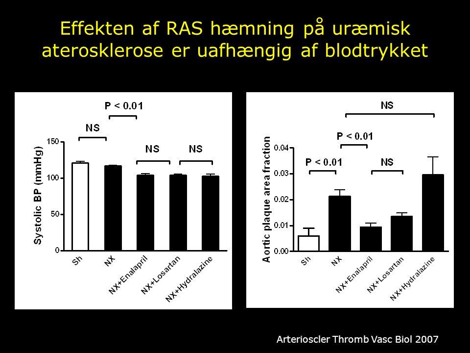 Effekten af RAS hæmning på uræmisk aterosklerose er uafhængig af blodtrykket