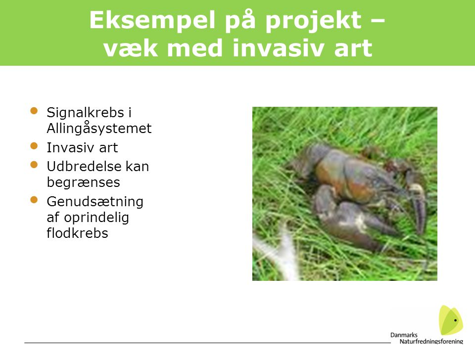 Eksempel på projekt – væk med invasiv art