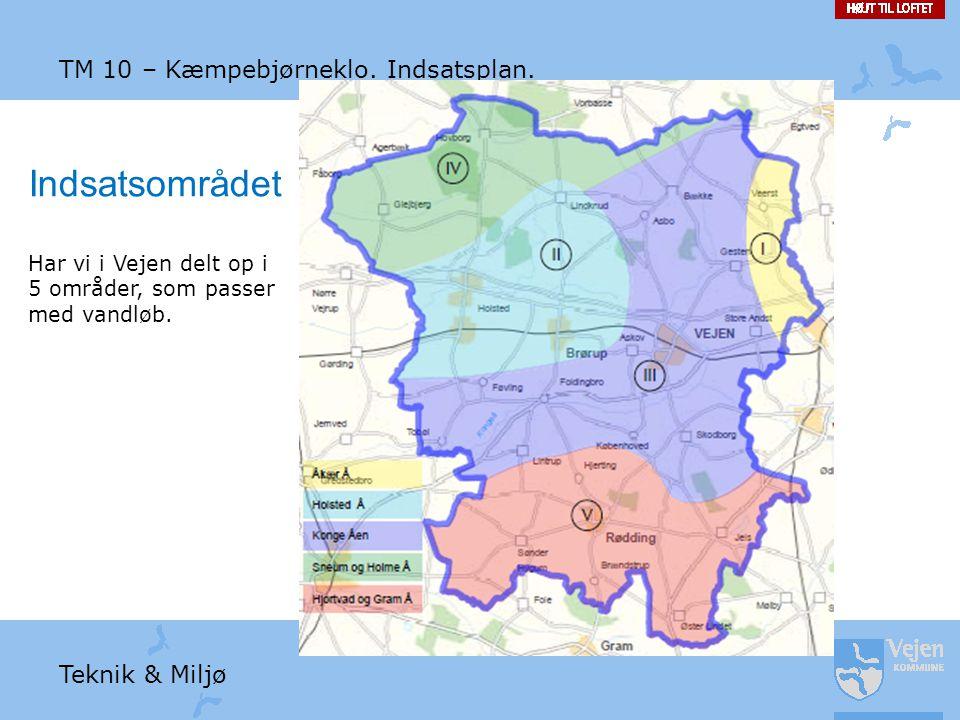 Indsatsområdet TM 10 – Kæmpebjørneklo. Indsatsplan. Teknik & Miljø