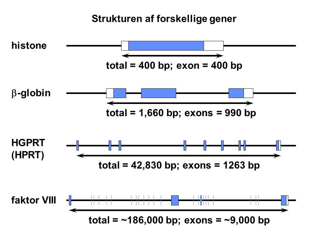 Strukturen af forskellige gener