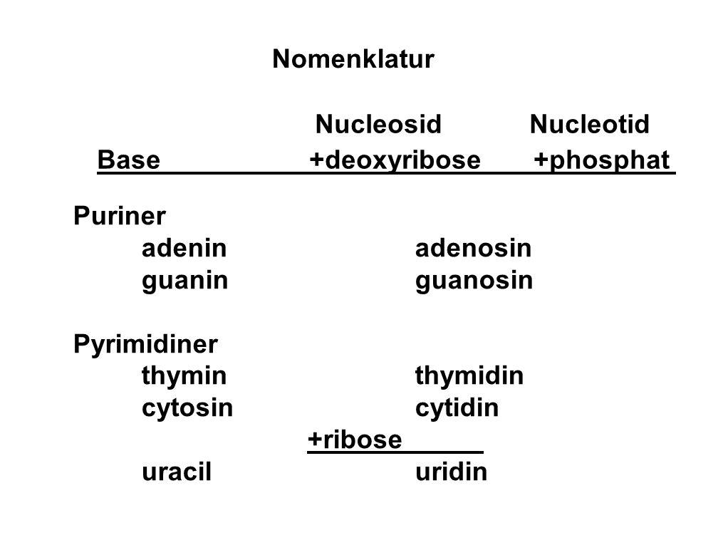 Base +deoxyribose +phosphat