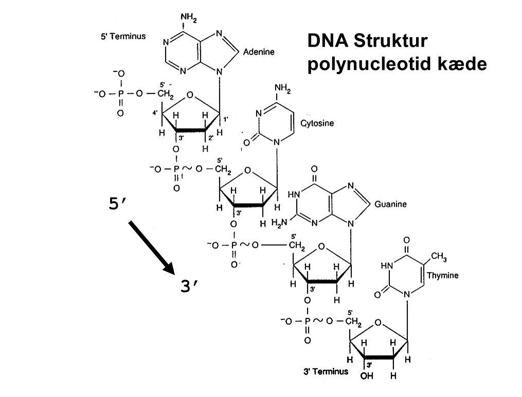 3',5'-phosphodiester bond