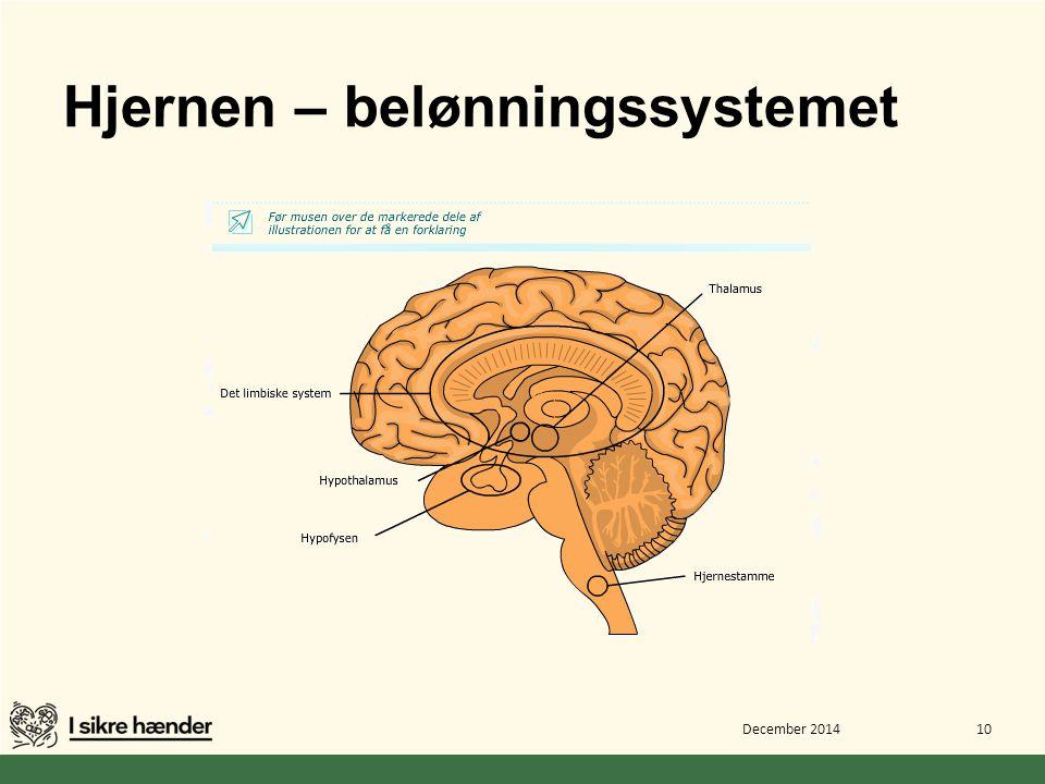 Hjernen – belønningssystemet