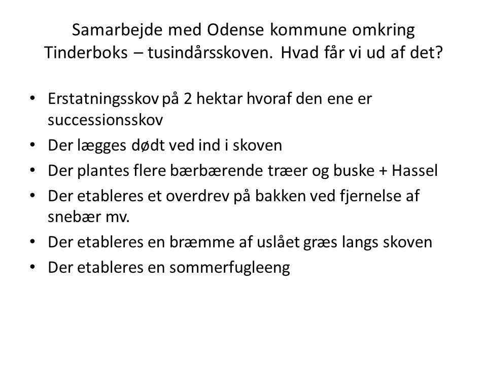 Samarbejde med Odense kommune omkring Tinderboks – tusindårsskoven