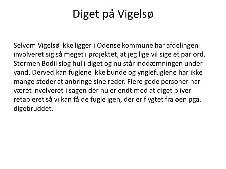 Diget på Vigelsø