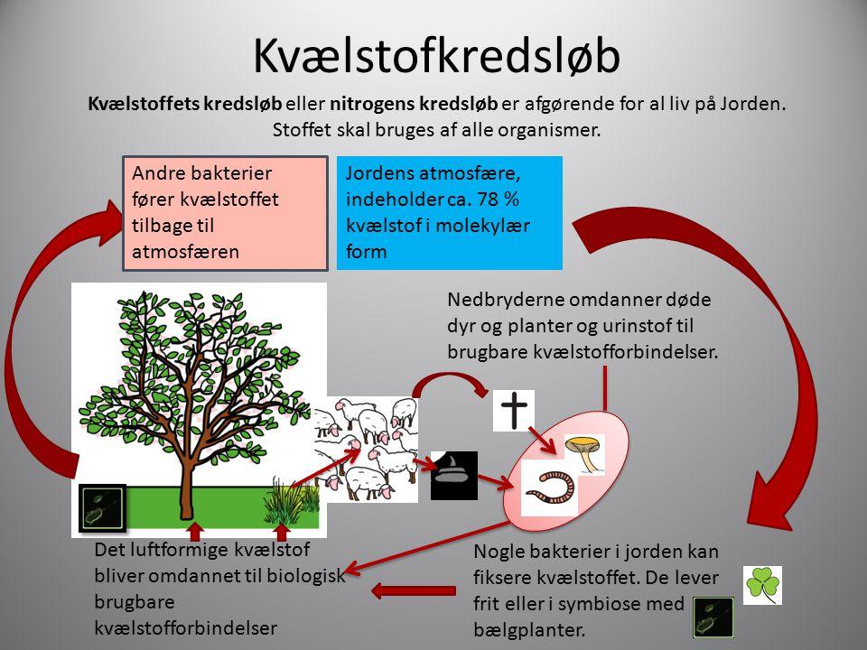 Kvælstofkredsløb Kvælstoffets kredsløb eller nitrogens kredsløb er afgørende for al liv på Jorden. Stoffet skal bruges af alle organismer.