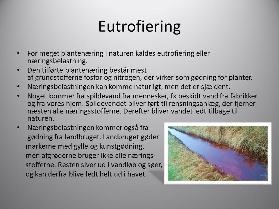 Eutrofiering For meget plantenæring i naturen kaldes eutrofiering eller næringsbelastning.