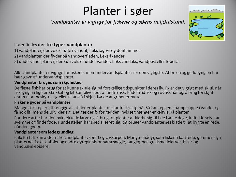 Planter i søer Vandplanter er vigtige for fiskene og søens miljøtilstand.