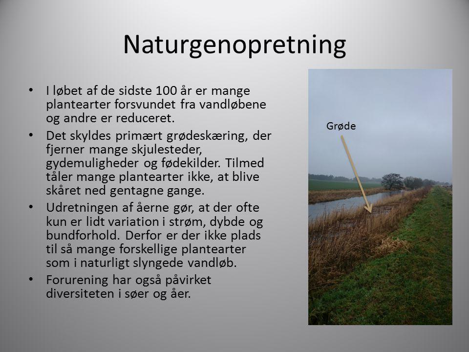 Naturgenopretning I løbet af de sidste 100 år er mange plantearter forsvundet fra vandløbene og andre er reduceret.