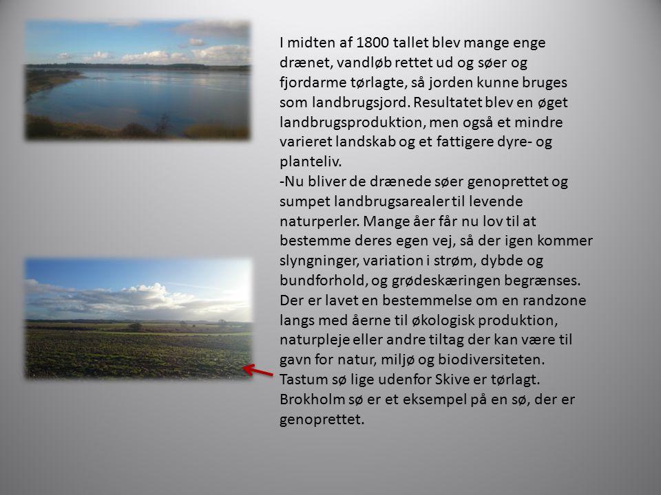 I midten af 1800 tallet blev mange enge drænet, vandløb rettet ud og søer og fjordarme tørlagte, så jorden kunne bruges som landbrugsjord. Resultatet blev en øget landbrugsproduktion, men også et mindre varieret landskab og et fattigere dyre- og planteliv.
