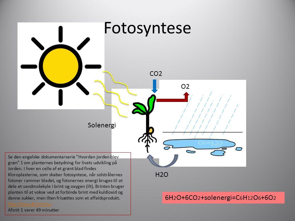 Fotosyntese CO2 O2 Solenergi H2O 6H2O+6CO2+solenergi=C6H12O6+6O2