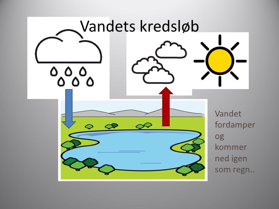 Vandets kredsløb Vandet fordamper og kommer ned igen som regn..