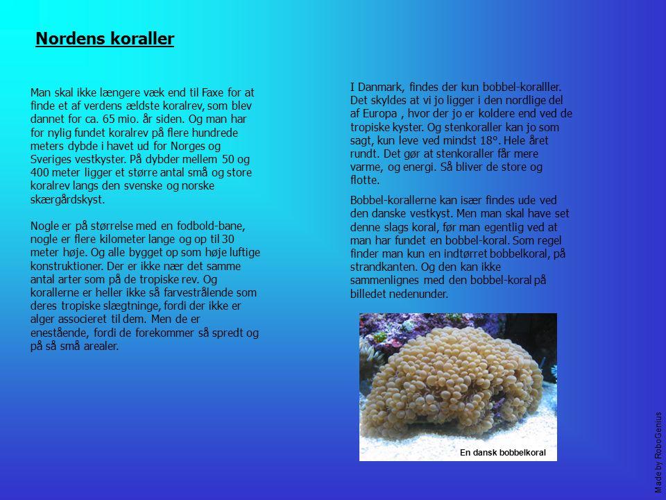 Nordens koraller