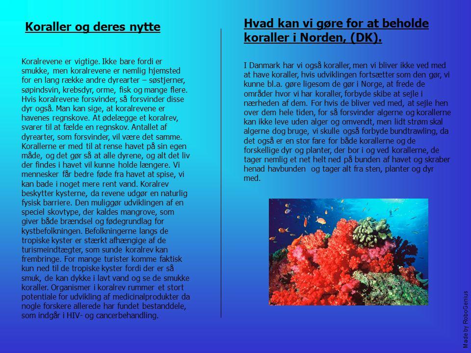 Hvad kan vi gøre for at beholde koraller i Norden, (DK).