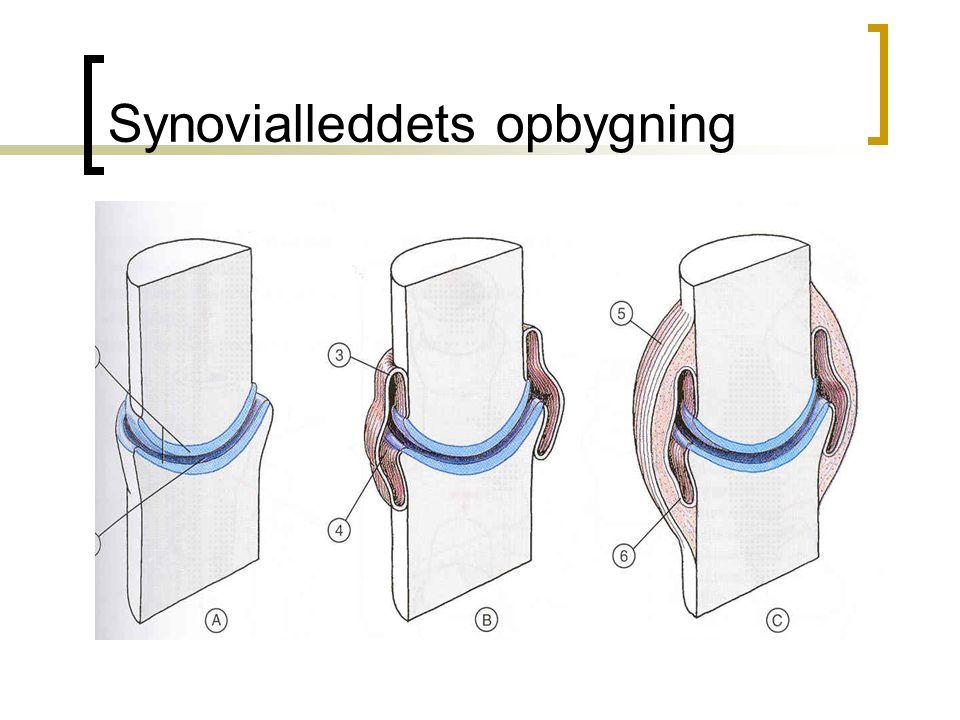 Synovialleddets opbygning
