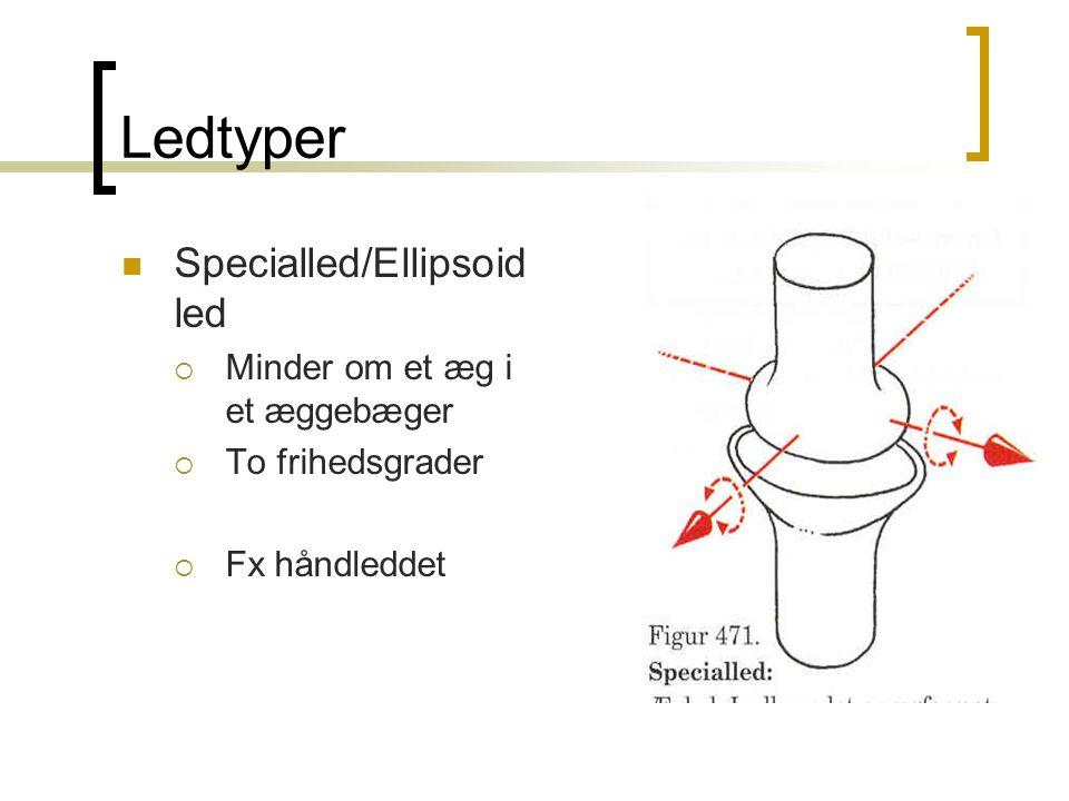 Ledtyper Specialled/Ellipsoidled Minder om et æg i et æggebæger