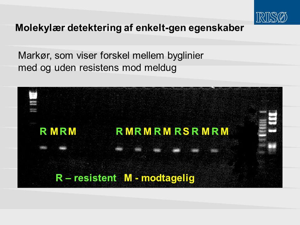 Molekylær detektering af enkelt-gen egenskaber
