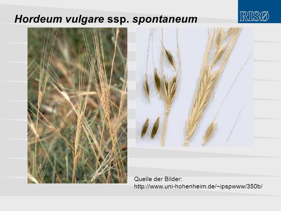 Hordeum vulgare ssp. spontaneum