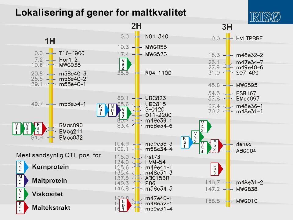 Lokalisering af gener for maltkvalitet