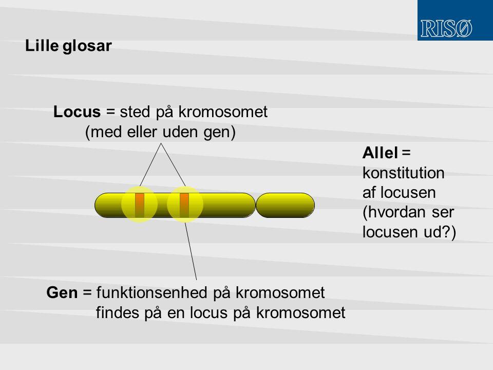 Locus = sted på kromosomet (med eller uden gen)