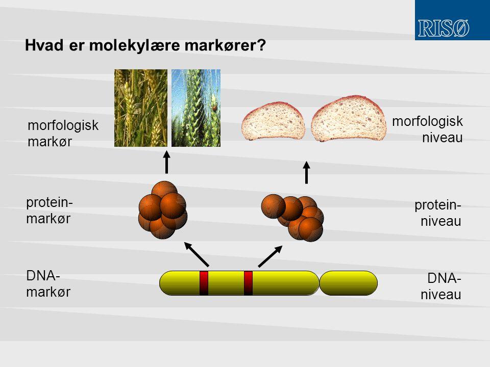 Hvad er molekylære markører