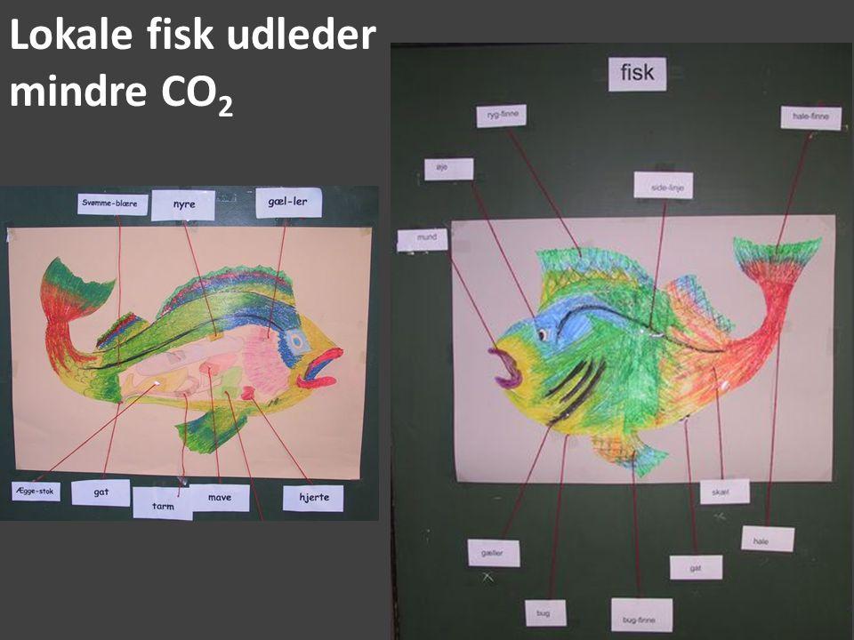 Lokale fisk udleder mindre CO2