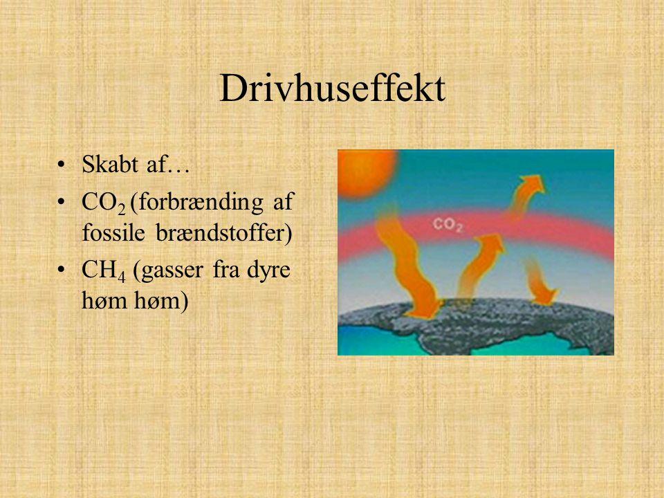 Drivhuseffekt Skabt af… CO2 (forbrænding af fossile brændstoffer)