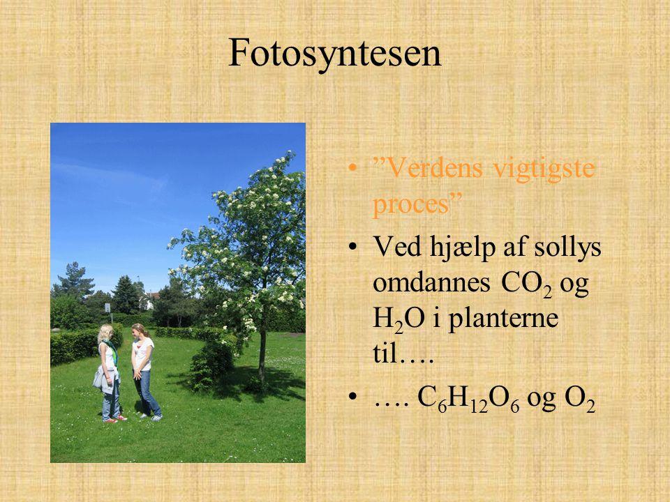 Fotosyntesen Verdens vigtigste proces