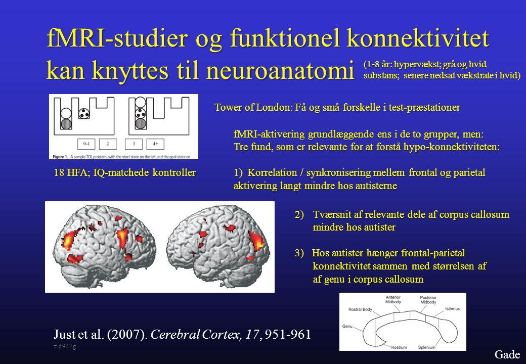 fMRI-studier og funktionel konnektivitet kan knyttes til neuroanatomi