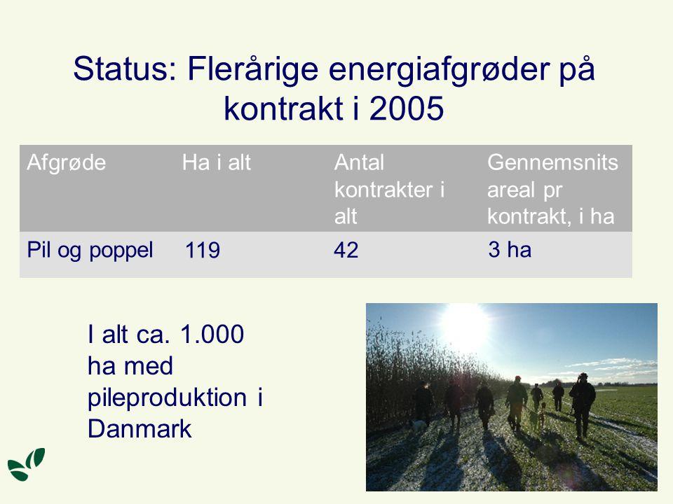 Status: Flerårige energiafgrøder på kontrakt i 2005